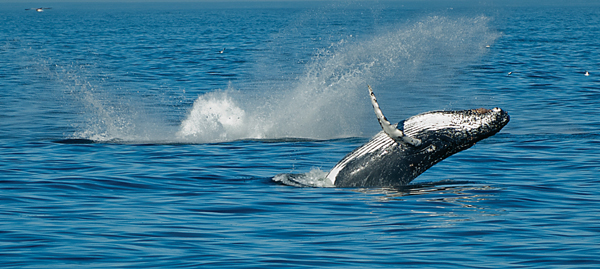 IndianOcean-WhaleSong-TomZydler-3